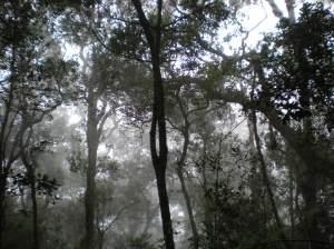 Misty way back