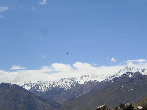 Langhza, spiti valley, spiti, village, bird watching, hawk, himalayas, offbeat travel, india, himachal pradesh