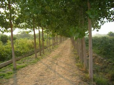 Punjab, Offbeat getaway, Countryside, weekend getaway