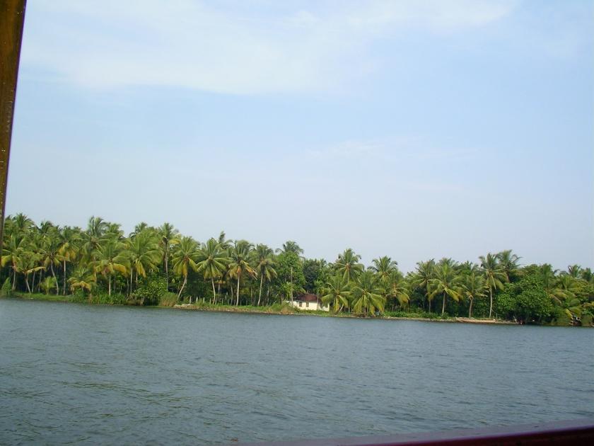 kerala, backwaters, cochin, coconut trees, palm trees, coastal india