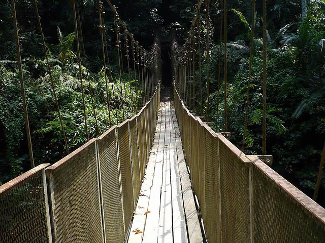 Taman Negara, Canopy Walk, Rainforest, Malaysia, Travel