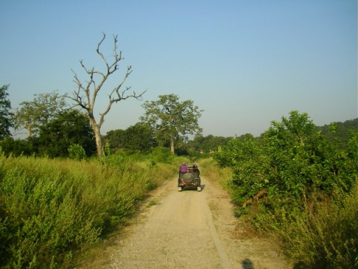 Jim Corbett, National Park, Forest, Jeep safari