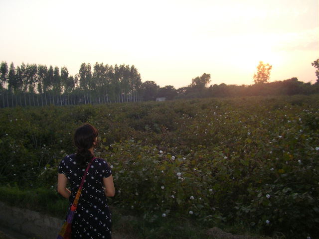 Punjab, countryside, sunrise, cotton farm, fruit farm, offbeat weekend travel