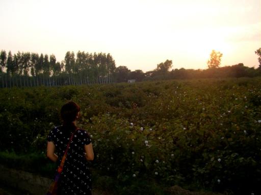Punjab countryside