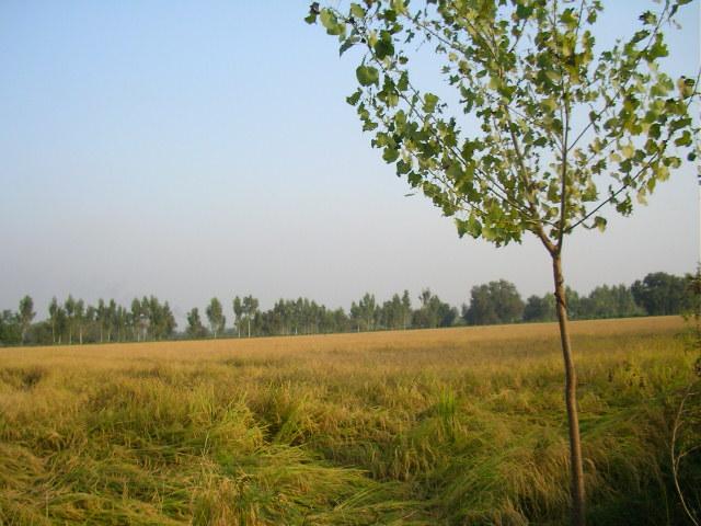 Punjab, Abohar, romantic getaway, Delhi weekend, Mohindra fruit farm