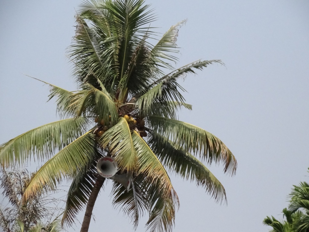 Alleppey, backwaters, kerala, India travel blog, palm trees