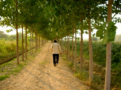 Punjab, countryside, Abohar, Ghallu, mohindra fruit farm