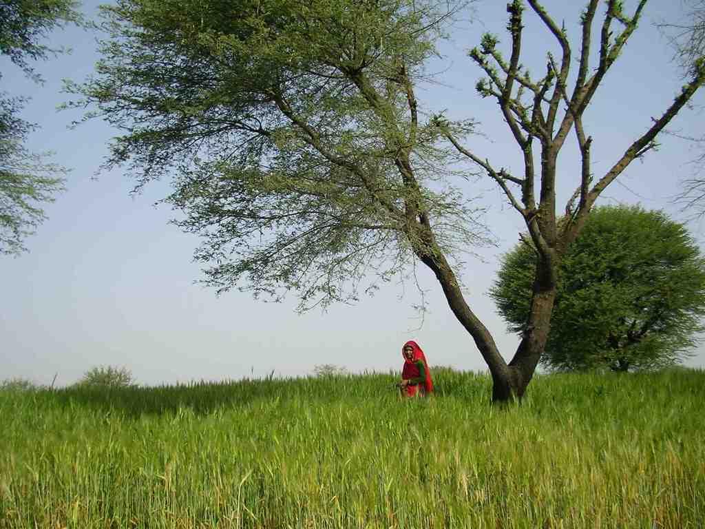 Jaipur, Nirvana organic farm, organic farmstay, rajasthan, delhi weekend getaway