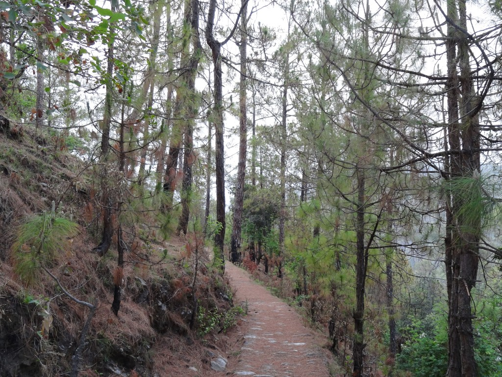 Peora, forests, Kumaon, Uttarakhand, Kumaoni villages, offbeat travel, Indian villages, Himalayan villages, countryside