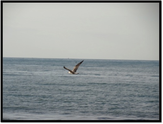 Turkey birds, Turkey black sea, Turkey pics, Turkey Karadeniz, Black sea travel