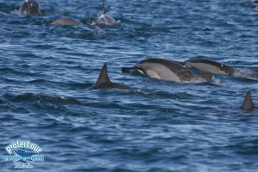 Mauritius swim with dolphins, activities Mauritius, dolphins Mauritius