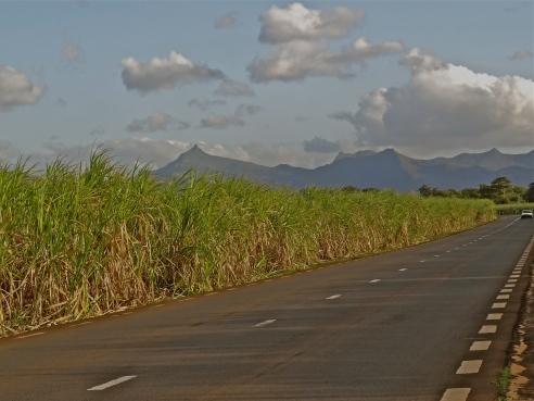 Mauritius island, Mauritius things to do, Mauritius country, Mauritius sugarcane, Mauritius photos