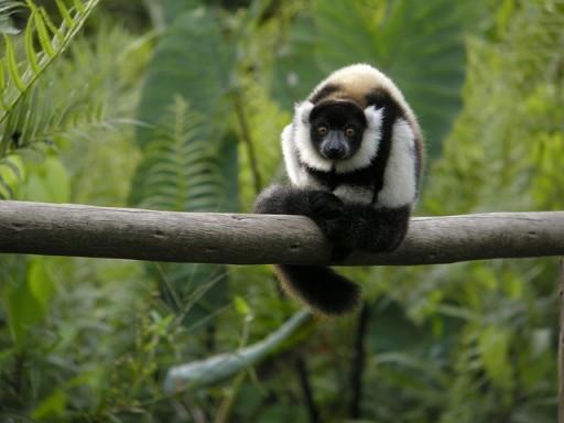 Madagascar, Madagascar photos