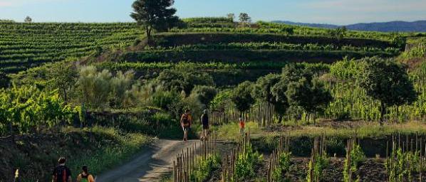Spain countryside, Spain wine country, Priorat