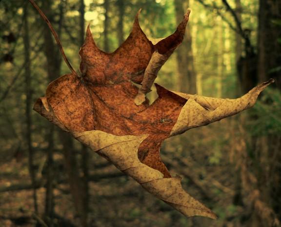 Canada autumn, Canada country photos, Canada photo gallery
