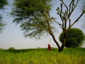 Rajasthan village, Rajasthan culture, organic farmstay India