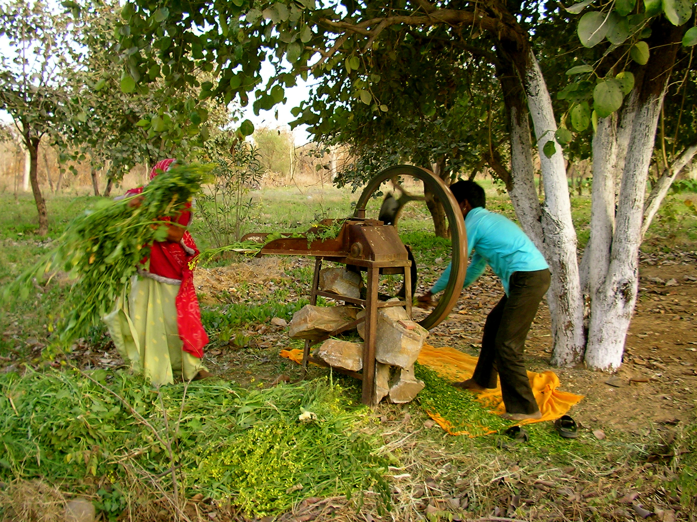 rural life in india essay Find long and short essay on city life vs village life for children and education and medical care are accessible facilities in many parts of rural india these.