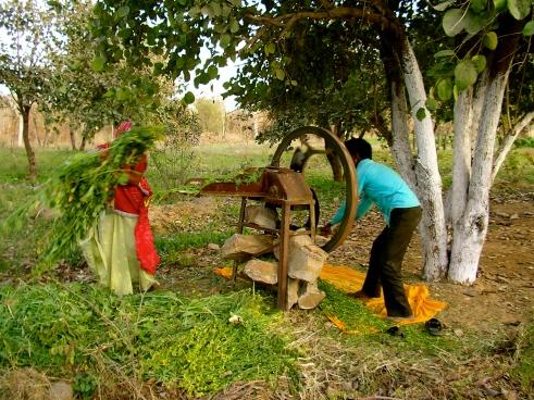 Rural Rajasthan, village life in India, Indian villages, Rajasthan culture