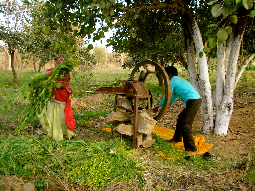 Rural Rajasthan, village life in India, Indian villages, Rajasthan culture