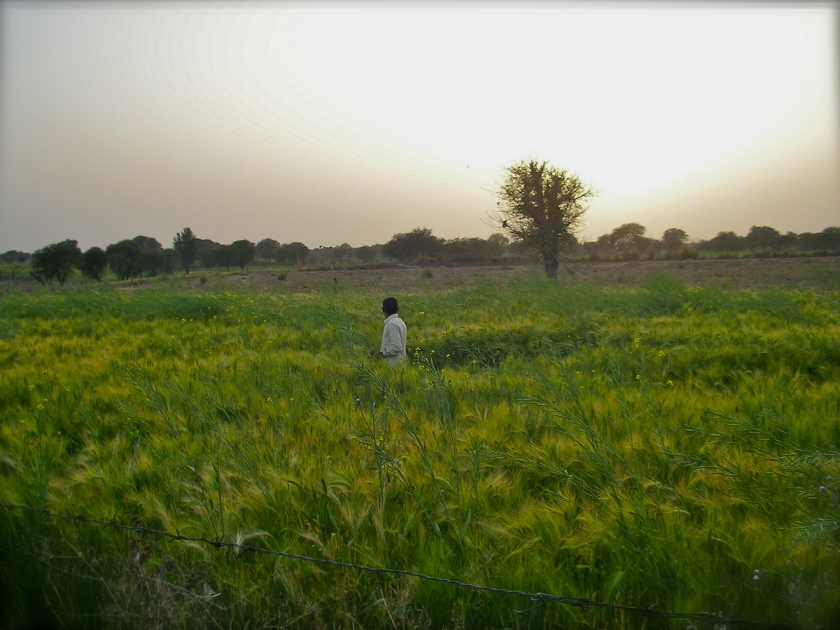 Rural Rajasthan, India farm stay, Rajasthani culture