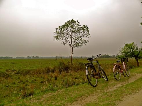 Majuli Assam, Majuli, Majuli island