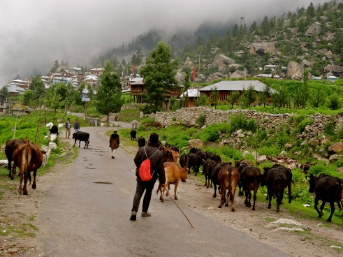 Sangla valley, Rakcham, Himachal photos