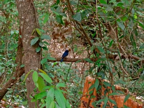 Himalayas birds, Uttarakhand birds, Bhimtal birdwatching
