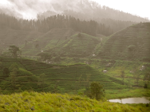 Sri Lanka tea plantations, Sri Lanka monsoon, Sri Lanka rains, train to Ella, Sri Lanka pictures