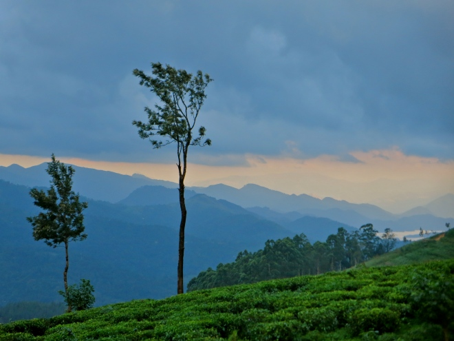 Sri Lanka tea estates, Sri Lanka tea plantations, tea estate bungalow sri lanka, Sri Lanka hill country, Sri Lanka pictures