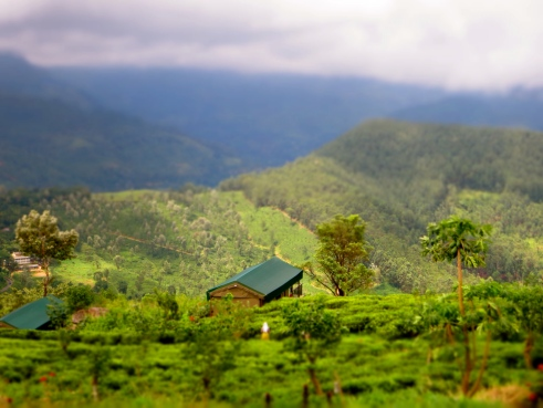 Madulkelle tea and eco lodge, eco Sri Lanka, Sri Lanka tea estates