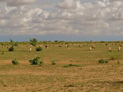 Rajasthan monsoon, Jaisalmer photos, Thar desert Rajasthan, rain in Rajasthan