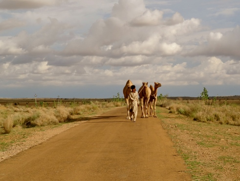 Thar desert India, Thar desert Rajasthan, Jaisalmer photos, camel Rajasthan