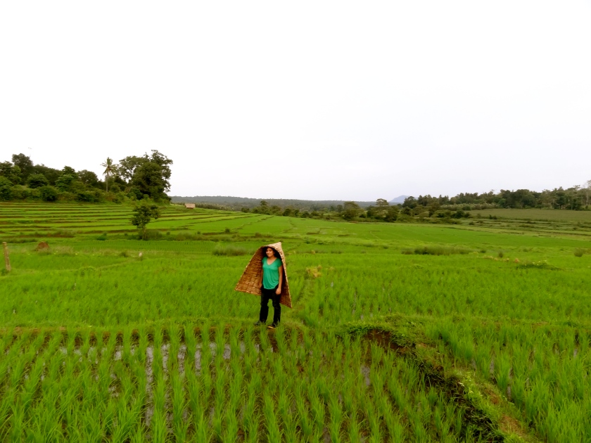 Coorg farm stay, Coorg photos, Coorg blog, Karnataka rice paddies
