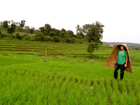 Coorg organic farm, Coorg homestay, Coorg rice paddies