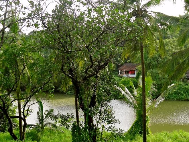 Goa backwaters, Goa monsoon, Goa secrets, Goa offbeat, Thivim Goa