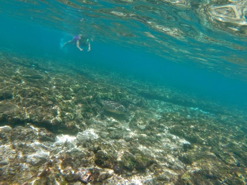 snorkeling philippines, sea turtles philippines