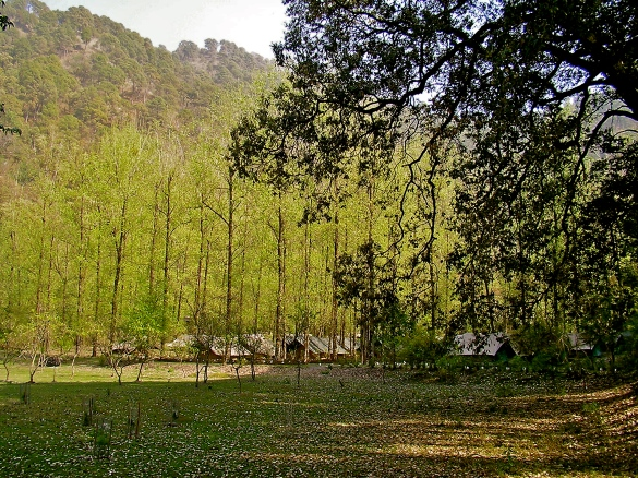 jungle camp sattal, camping uttarakhand