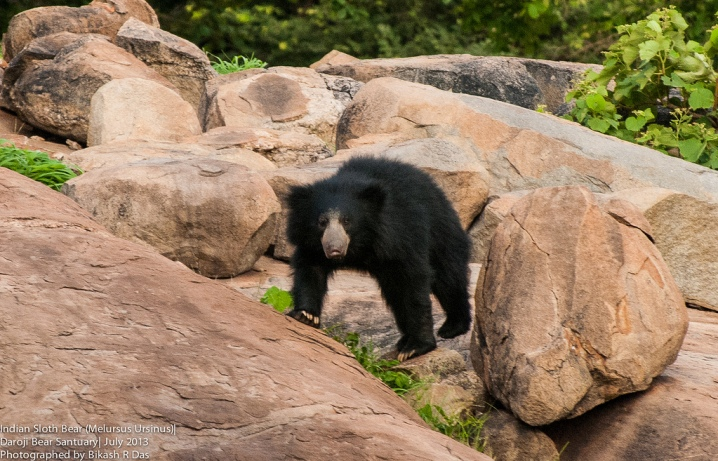 Daroji Sloth Bear Sanctuary, Karnataka wildlife sanctuary, places to visit Hampi