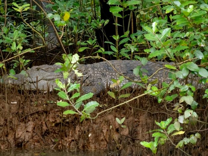 Goa wildlife, Goa backwaters