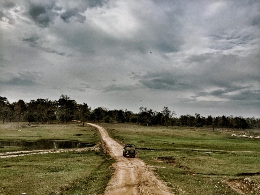 Pench national park madhya pradesh
