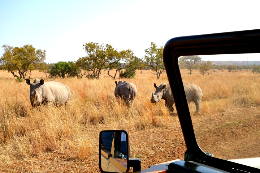 Dinokeng game reserve, wildlife south africa, rhinos south africa