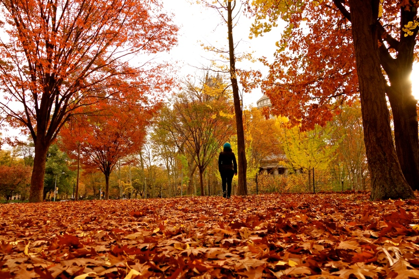 fall colors new york, autumn blogs, Shivya Nath