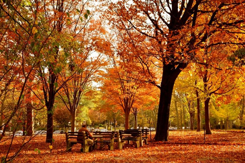 autumn essay, fall foliage nyc, autumn new york