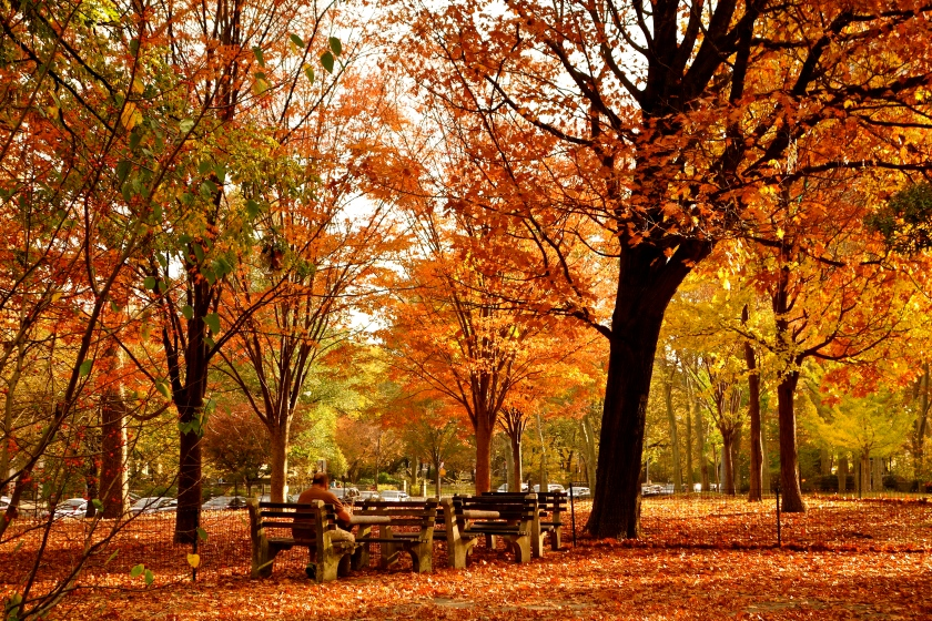 could dying be beautiful fall colors in new york city the autumn essay fall foliage nyc autumn new york