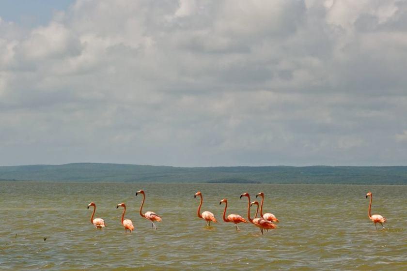 laguna de oviedo, dominican republic flamingoes, dominican republic barahona, casa del mar paraiso