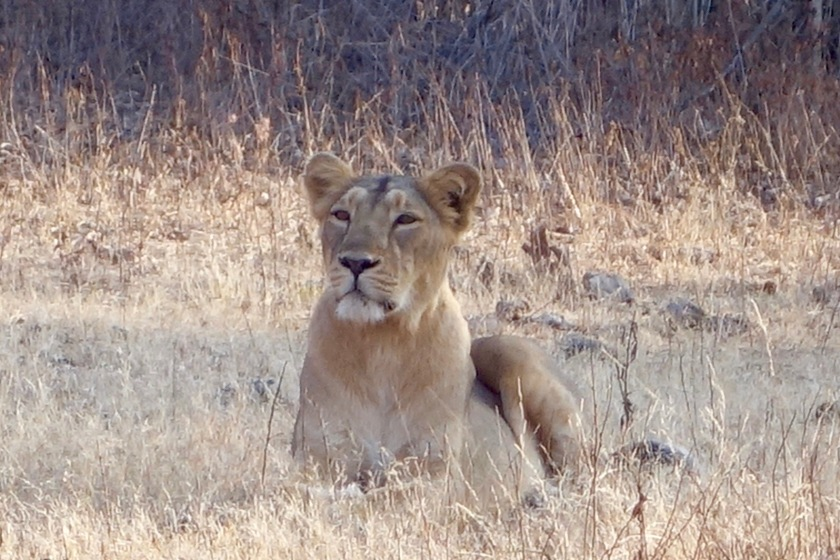 gir national park, sasan gir, sasan gir national park