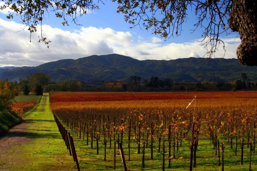 Napa valley, California contest, lufthansa san jose, travel contest india