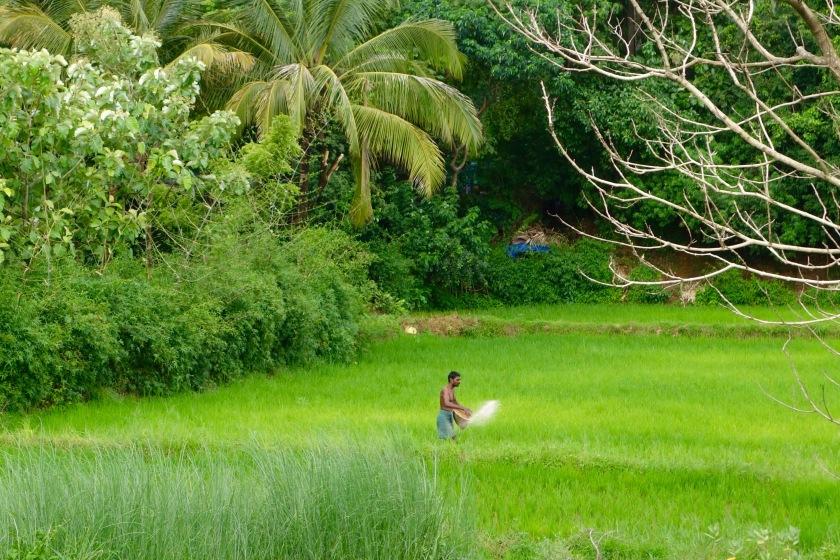 Kerala monsoon, Kerala photos, Kerala offbeat
