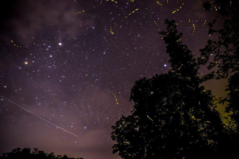purushwadi, purushwadi fireflies, getaways near mumbai